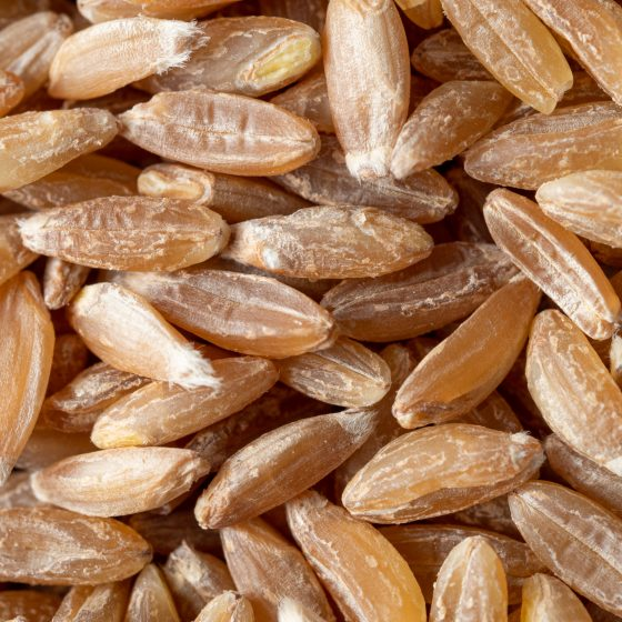 spelt seeds texture as food background. Spelt seeds pattern top view or flat lay