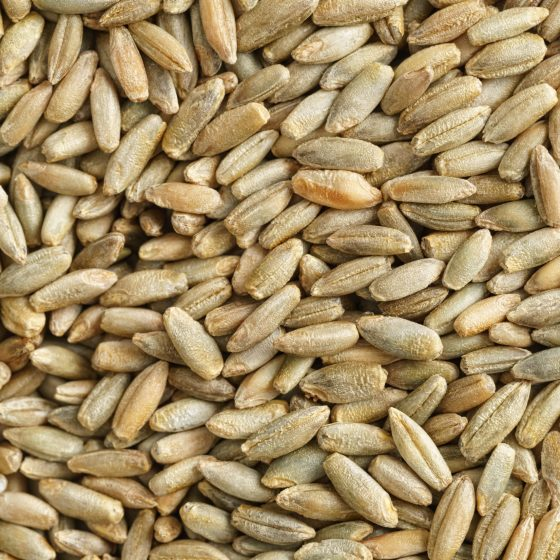 Close-up shot of dry oats from above